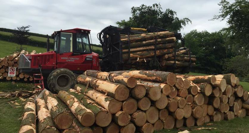 Timber Purchasing in Devon