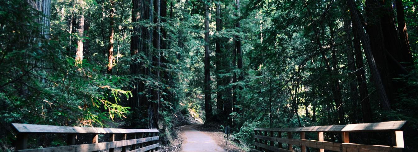 Bridge within a Forest, Weeks Forestry
